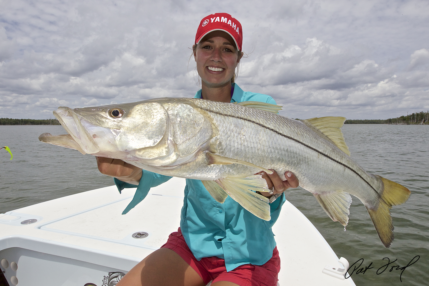 The last years the errol flynn blog for Fishing for snook