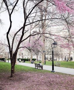 Curtis Center in Spring