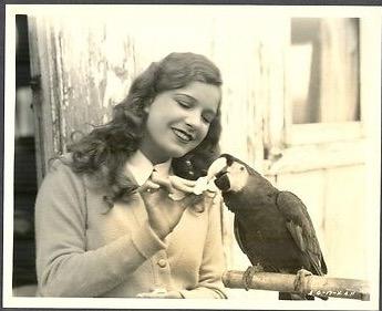 ld_parrot1